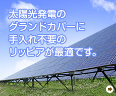 太陽光発電のグランドカバー
